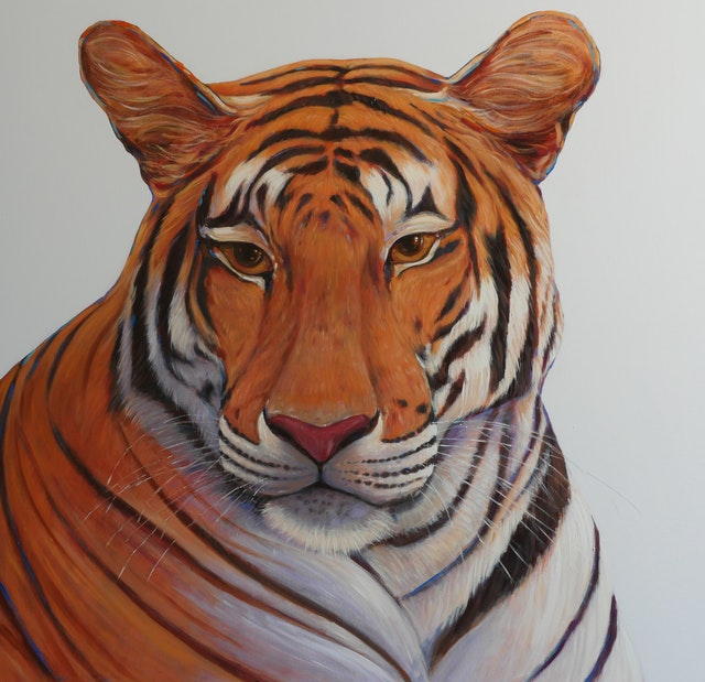 Claudio Tiger 100x100