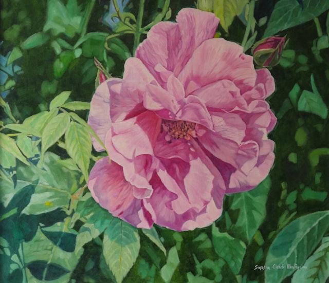 Susanna Rose 80x70
